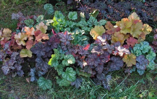 Какие растения любят тень? самые тенелюбивые цветы для сада: целых 10 штук! | красивый дом и сад