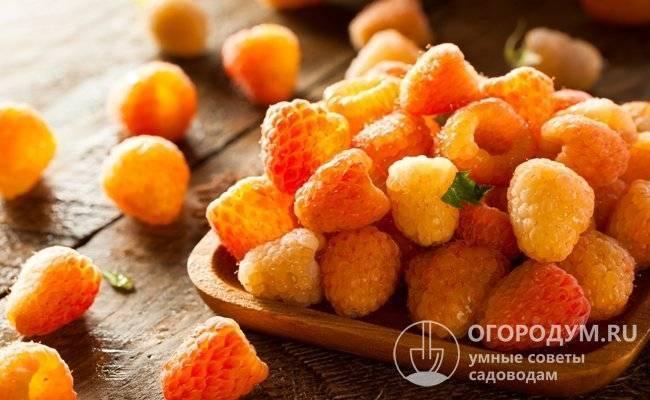 Малина «оранжевое чудо»: посадка и уход, описание сорта
