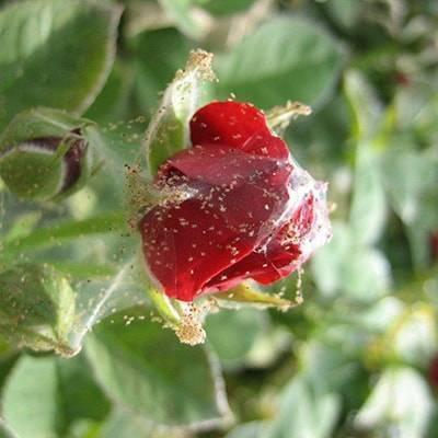 Вредители на яблоне: описание с фото и методы борьбы