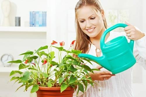 Правильный полив комнатным растениям: как часто, в какое время суток