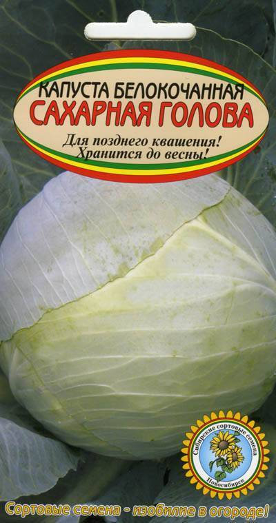Сахарная голова – самая вкусная капуста