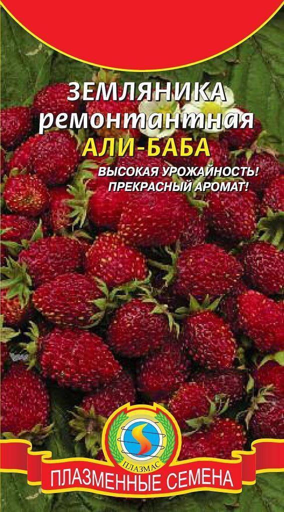 Земляника сорт али баба: душистые ягоды до поздней осени