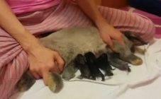 Материнские секреты крольчих: все о кормлении потомства