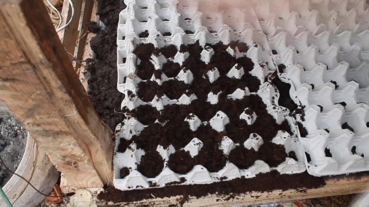 Как вырастить редис?