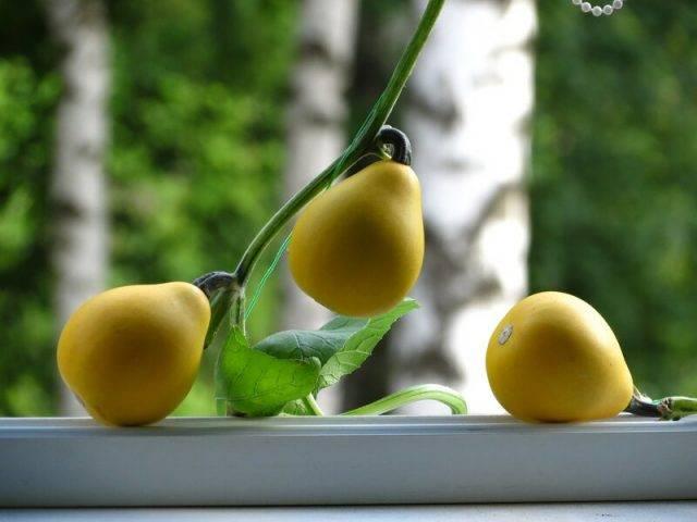 Декоративная тыква: выращивание для интерьера
