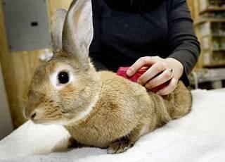 Как ухаживать за кроликами в домашних условиях и чем кормить