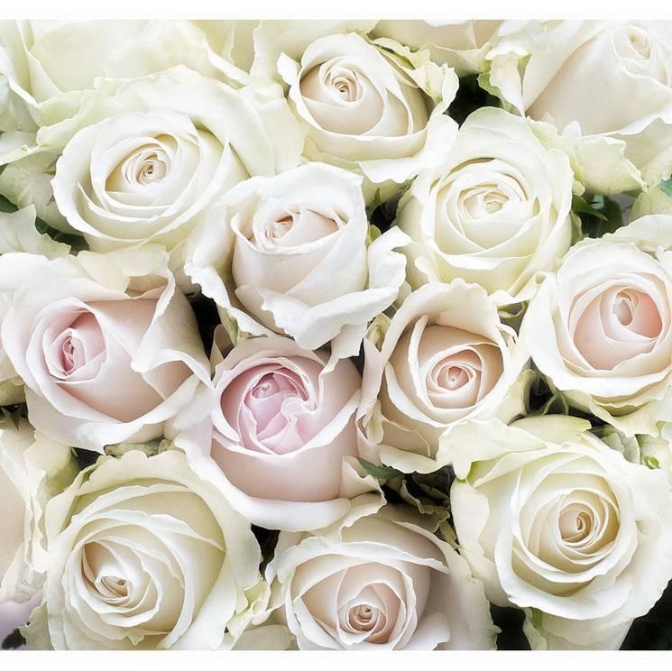 22 самых красивых вида и сорта роз с названиями