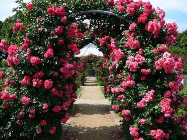 Чайная роза (46 фото): самые популярные сорта чайной розы с названиями, цвет роз и особенности сорта «дэй»