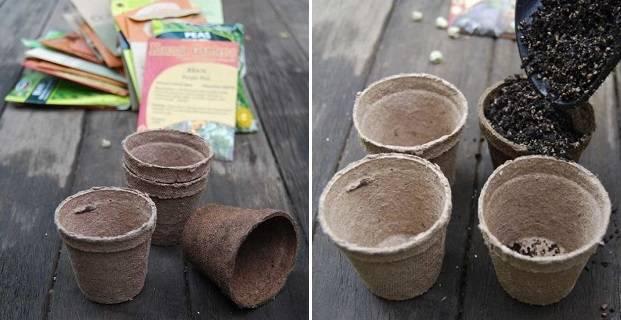 Выращивание рассады огурцов в торфяных горшочках и таблетках в домашних условиях: когда и как сажать и все
