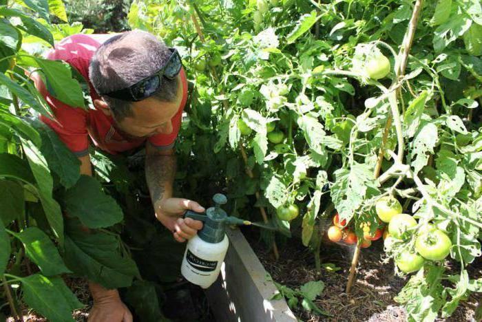 Инструкция по применению «ридомила голд» для обработки винограда, дозировки и срок ожидания