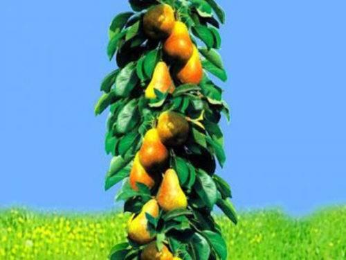 Фото карликовых яблонь и особенности их выращивания
