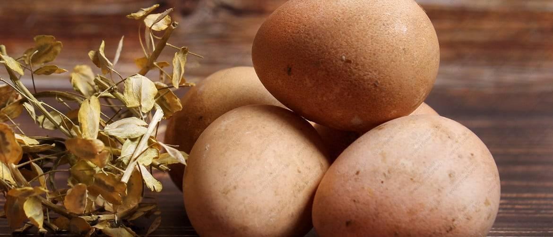 Когда начинают нести яйца цесарки?