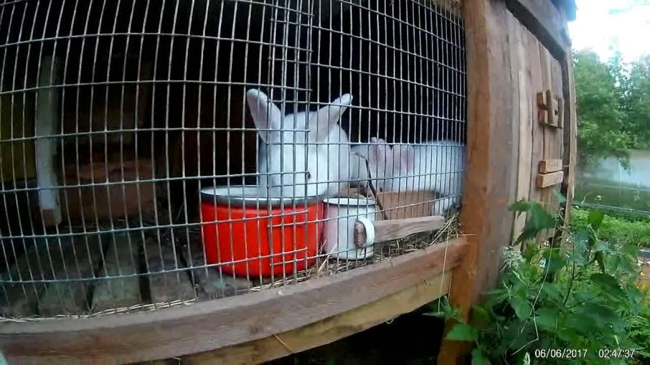 Чем нельзя кормить кролика: список пищи которая не рекомендуется животному