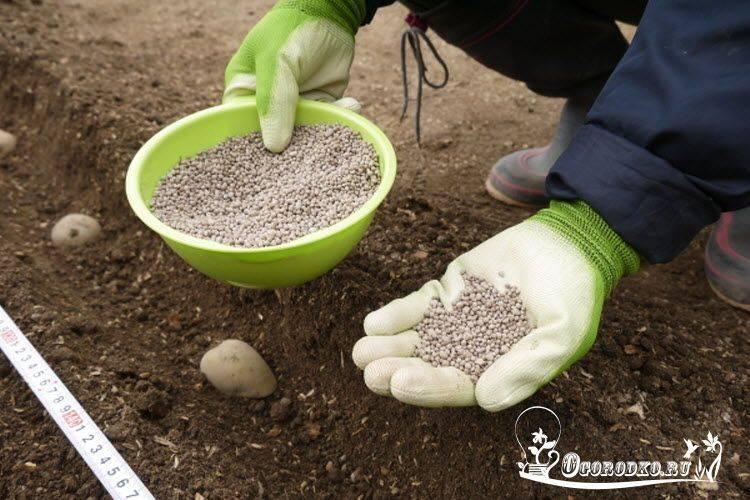 Как правильно использовать мочевину в саду и в огороде