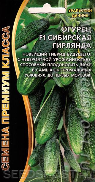 """Огурец """"сибирская гирлянда"""": описание сорта, характеристики, посадка и уход"""