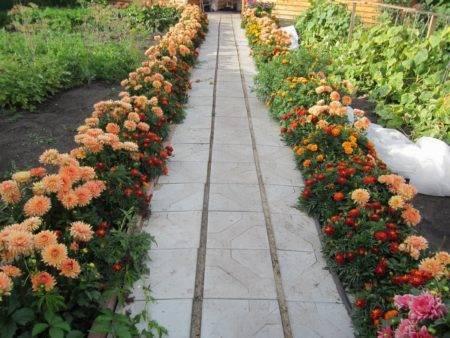 Неприхотливые низкорослые цветы для клумбы: название, фото