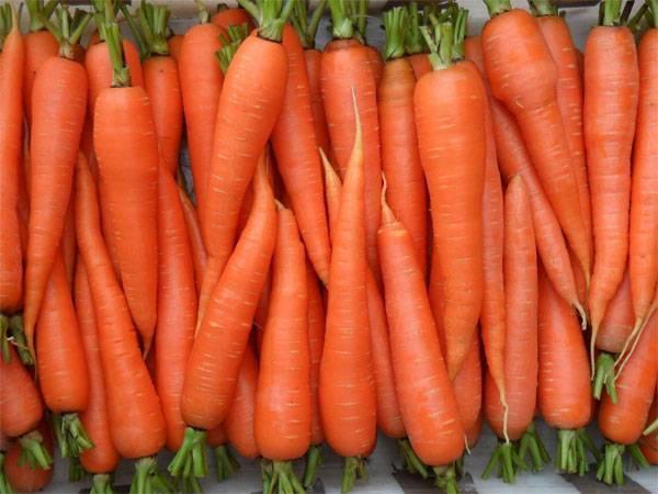 Чем обработать землю под морковь. какую почву любит морковь