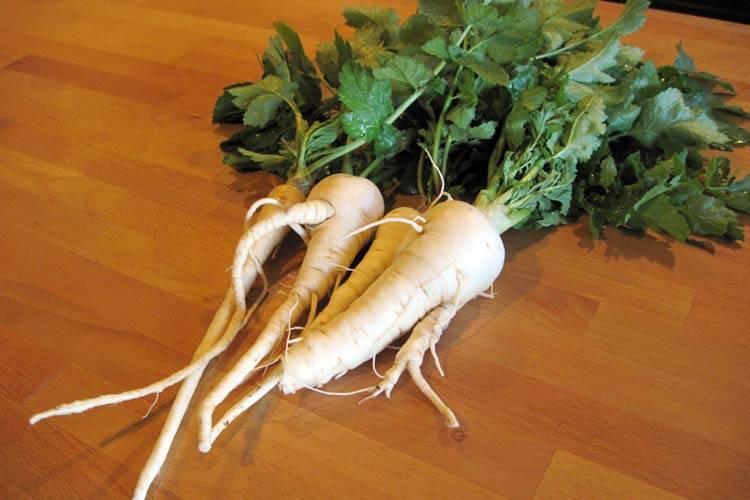 Пастернак — выращивание забытого, но очень полезного овоща
