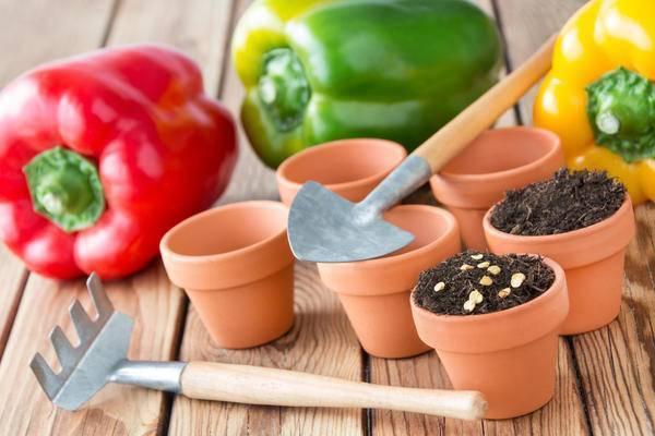Как сажать семена помидоров на рассаду в домашних условиях