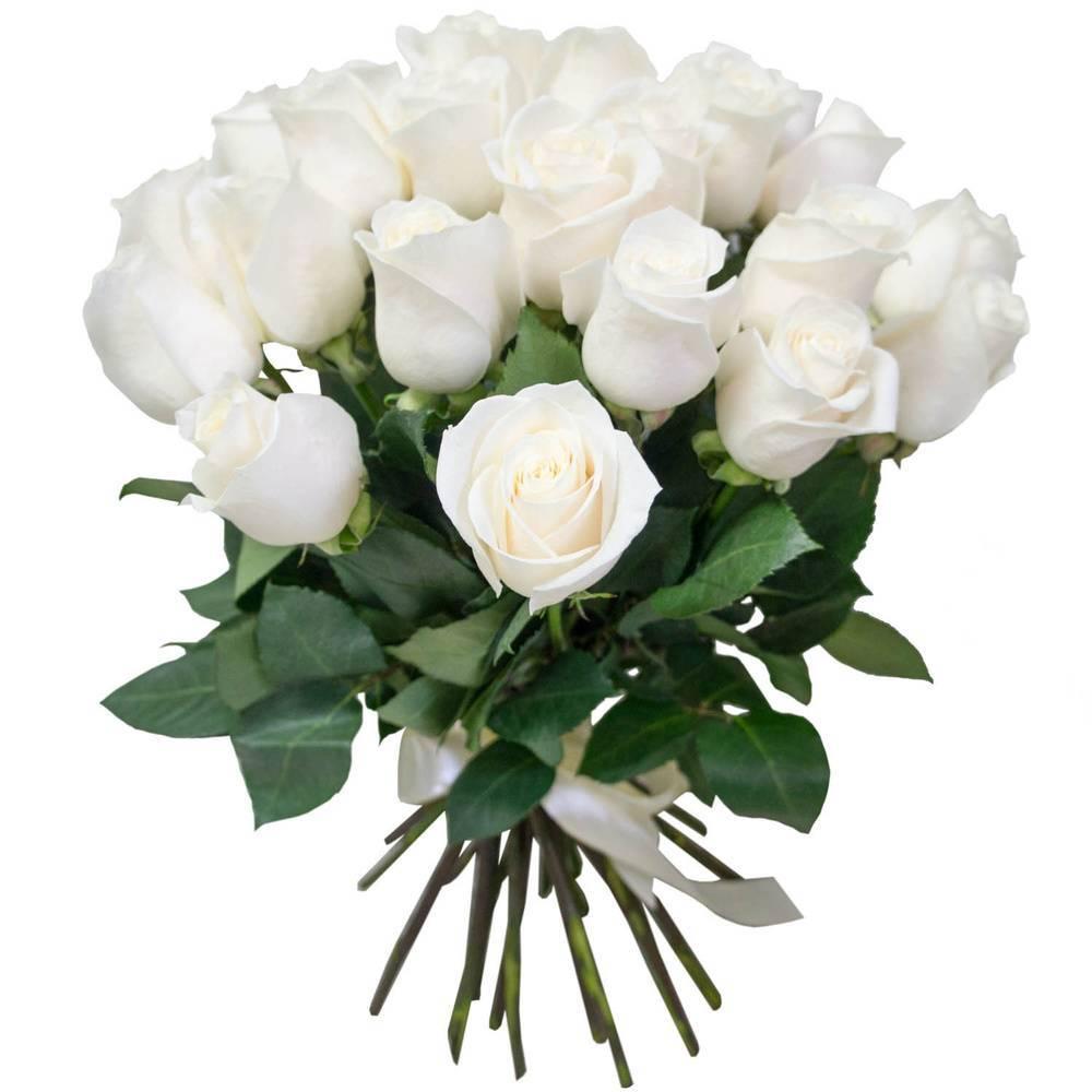 Стихи про белую розу - сборник красивых стихов в доме солнца