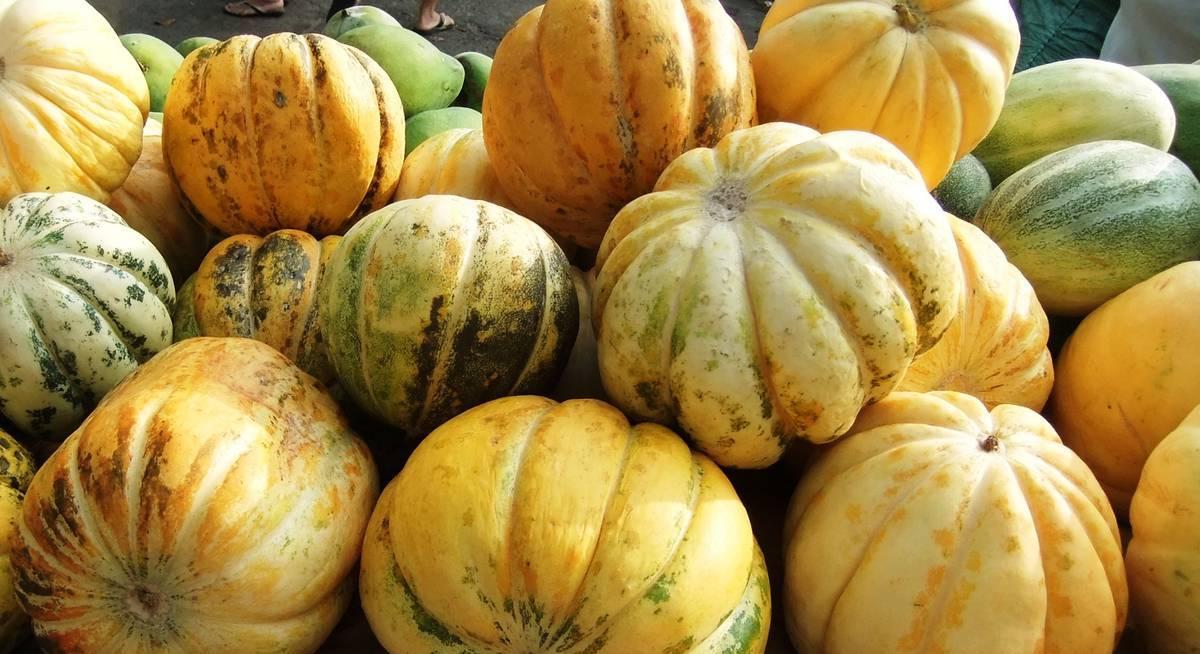 Дыня канталупа: выращивание, описание, фото