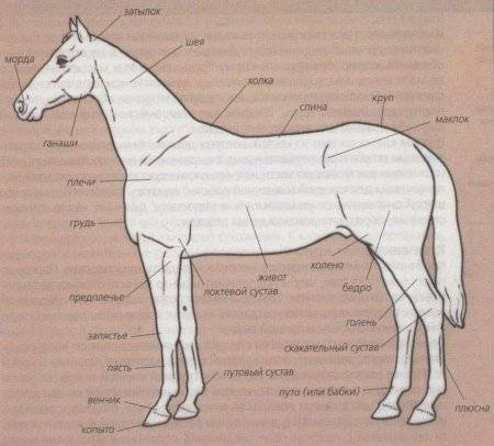 Все про стати лошади