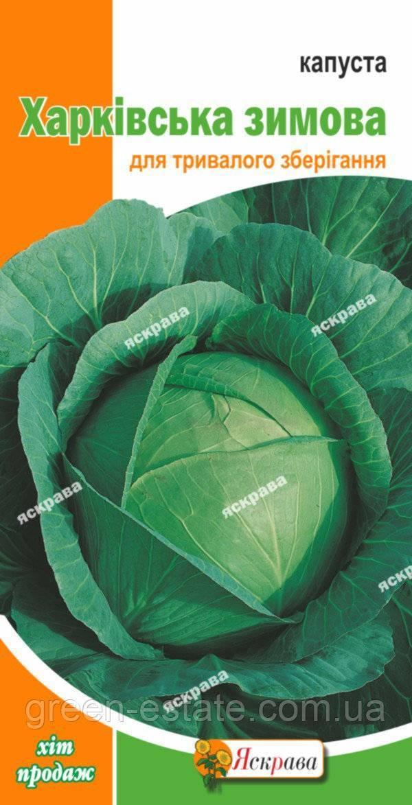 Описание сорта капусты «харьковская»