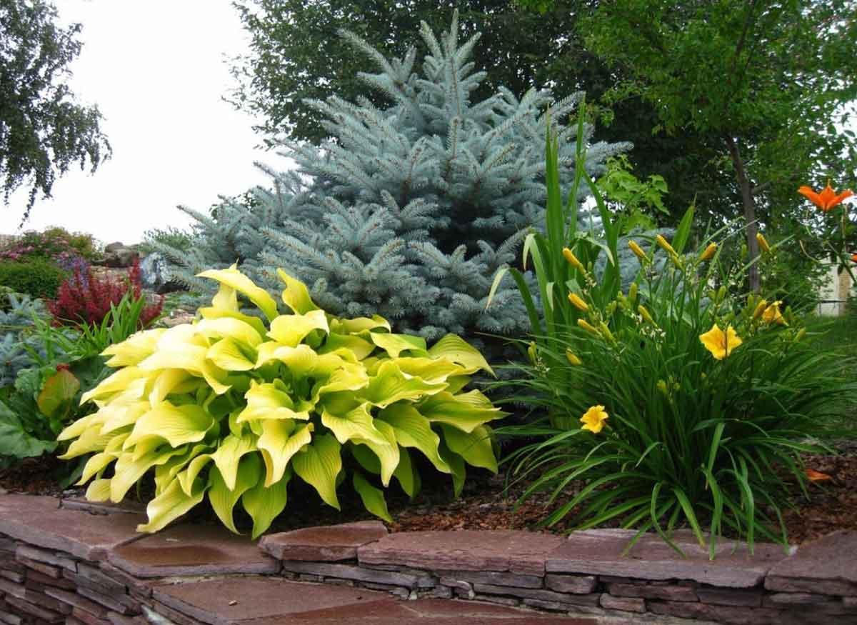 Цветущие хосты – самые красивые сорта (фото, описание, выращивание)