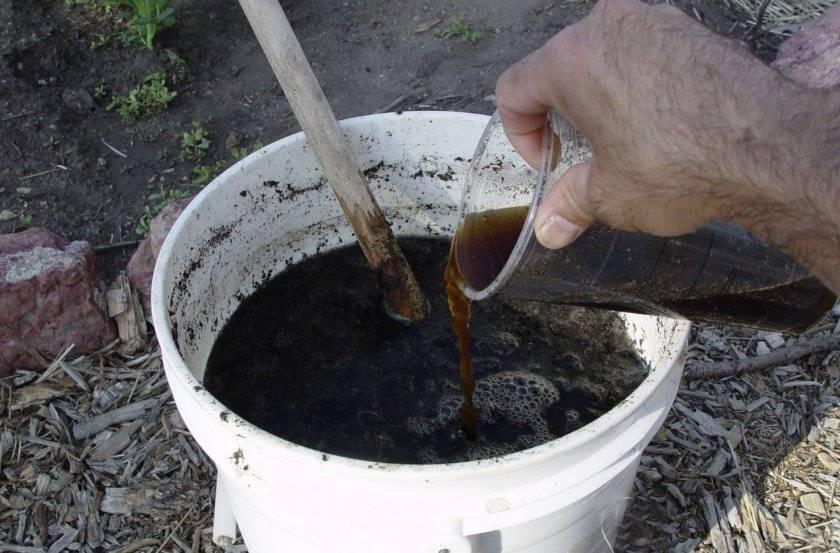 Правила весенней посадки ежевики в открытый грунт