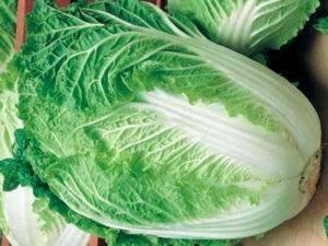 Как посадить и вырастить пекинскую капусту? её особенности и характеристики