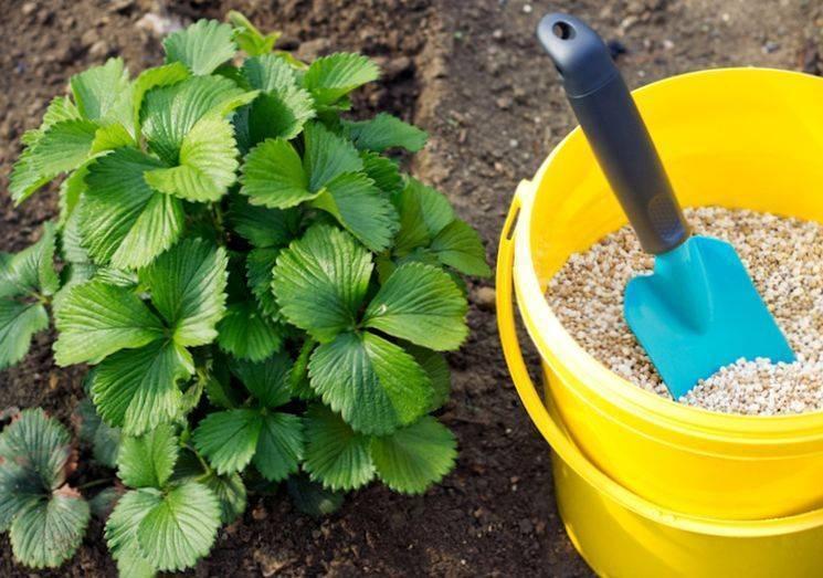 Подкормка клубники осенью — чем и как подкормить клубнику после лета