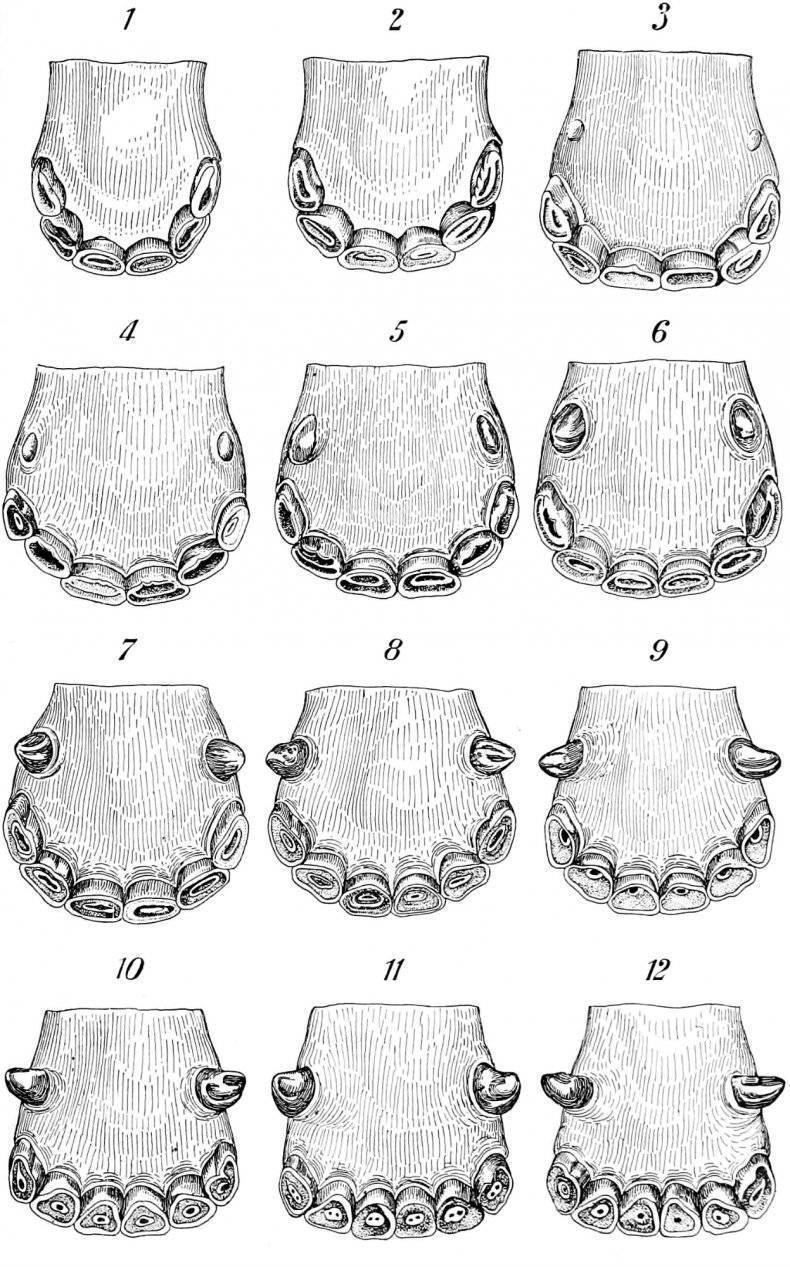 Масти и аллюры лошадей. признаки, позволяющие определять возраст лошадей по зубам, масть и отметины лошадей, определение возраста лошадей - коневодство в ссср