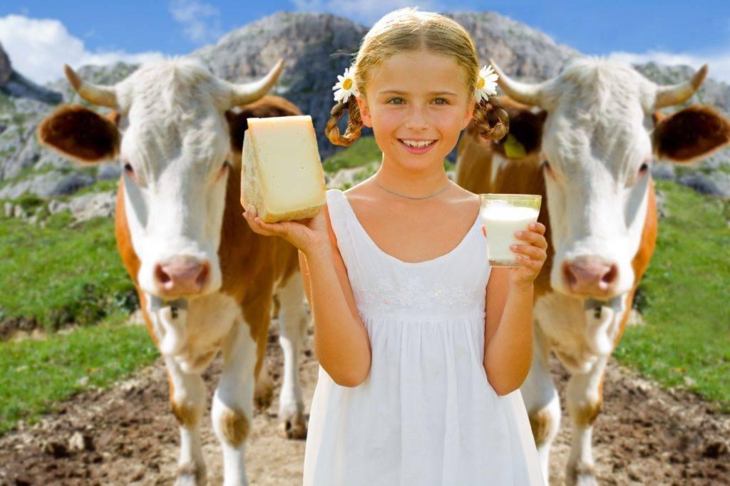 Жирность коровьего молока – один из важнейших показателей продуктивности