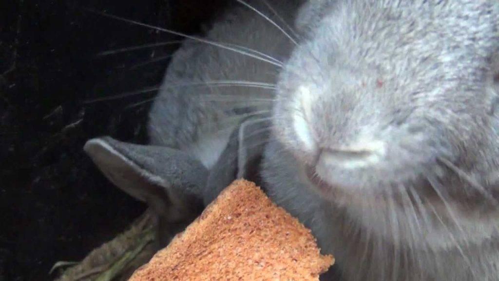Рацион имеет значение! можно ли давать кроликам конский щавель и как это делать правильно?