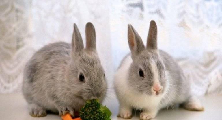 Какие овощи можно давать кролику декоративному