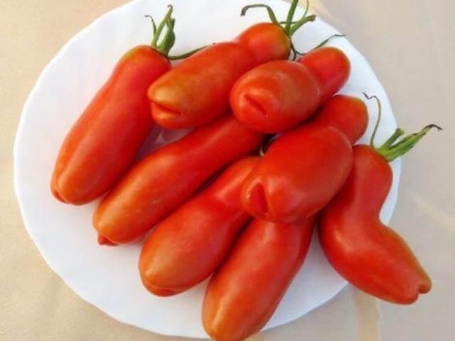 этому побуждает помидоры женское счастье фото нужно вырезать