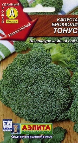 Как вырастить и приготовить полезную капусту брокколи начинающему огороднику и «ленивому дачнику»