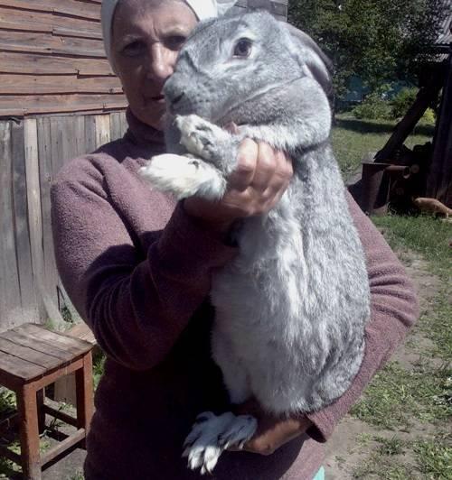 Описание пород кроликов с фотографиями