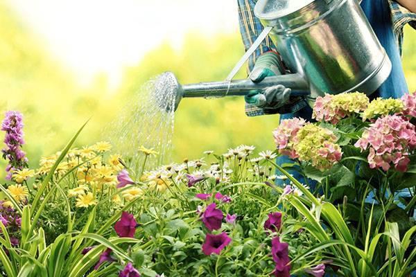 Посадка и уход за лилиями: полив, подкормки, укрытие на зиму. как покупать лилии
