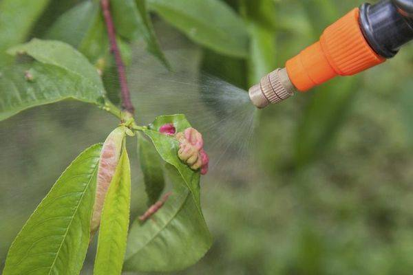 Чем обработать растения от тли во время плодоношения