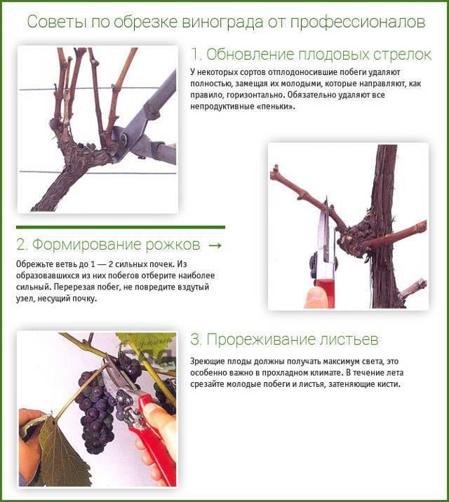 Агротехника винограда - формирование кустов на винограда