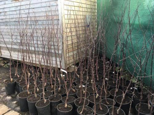 Посадка саженца яблони. правильная технология и ошибки начинающих садоводов