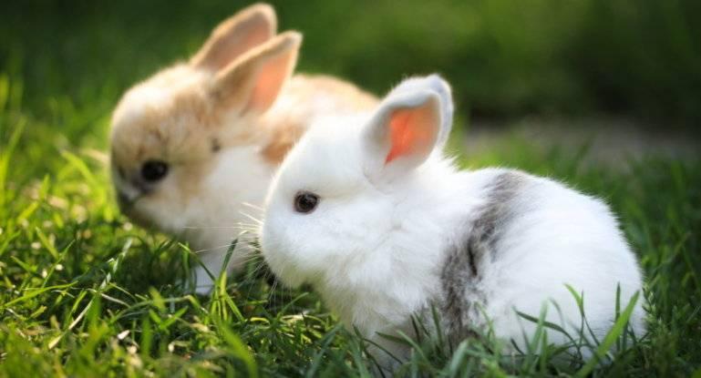 Инфекционные болезни кроликов - симптомы, лечение, препараты, причины появления   наши лучшие друзья