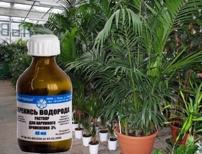 Перекись водорода для рассады и растений – преимущества, способ применения, нормы для овощных культур