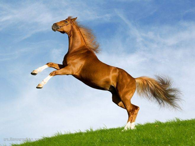 Сколько живут лошади и что влияет на продолжительность жизни?
