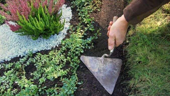 Чтобы не росла трава на дорожках народные средства? чем полить дерево, чтобы оно быстро засохло что сделать чтобы не росла трава на.
