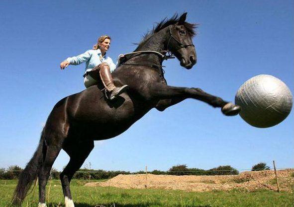Правила тренировки лошадей