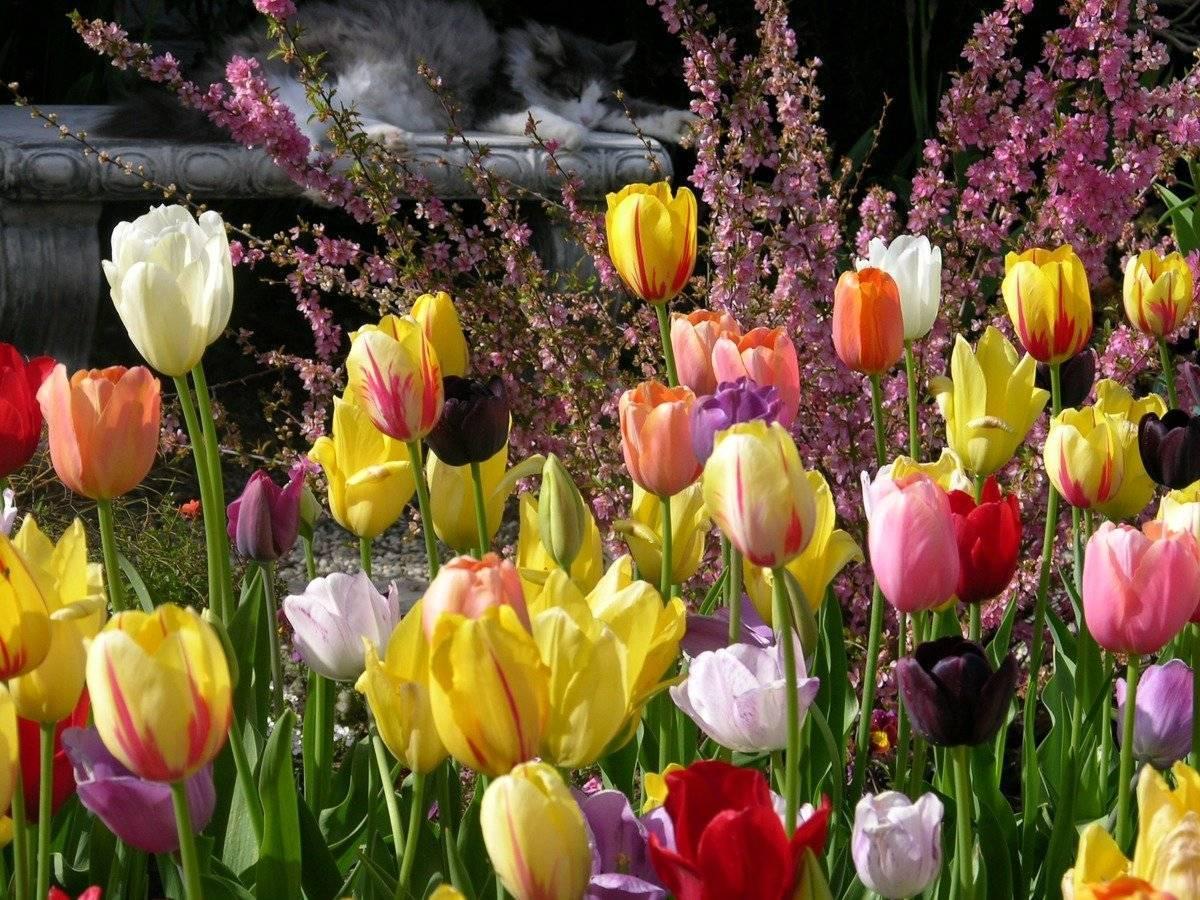 Разбор и классификация луковиц тюльпанов