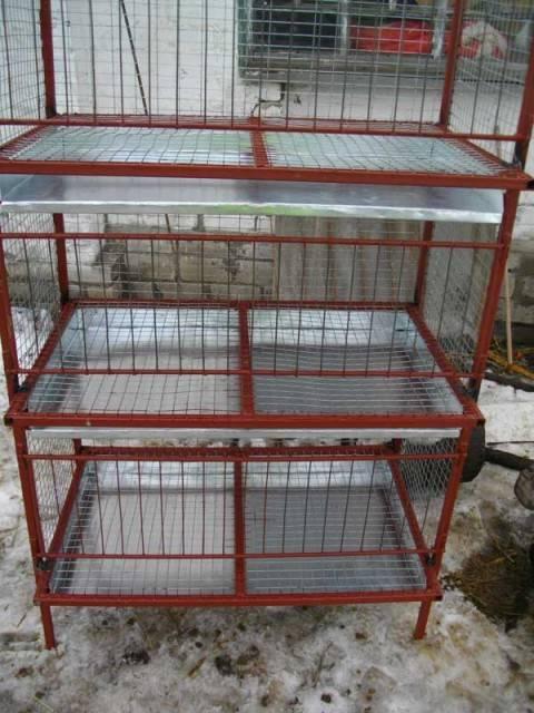 Особенности выращивания и содержания бройлеров в клетках в домашних условиях и на улице