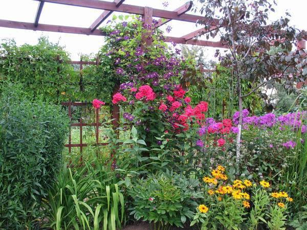 С какими цветами сочетаются лилейники в дизайне сада, фото